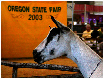 OR State Fair Pictures (click for more)