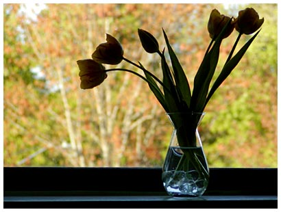 tulips on the windowsill