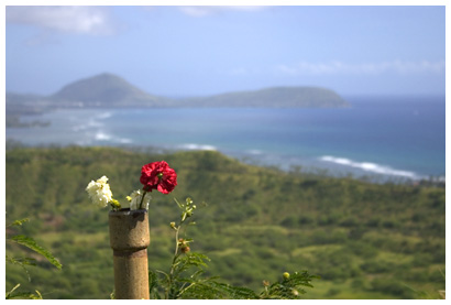 flowers on Diamond Head (click for more)