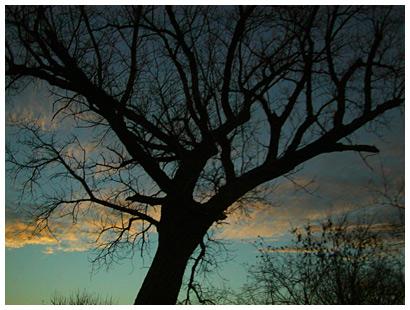 Looming Tree