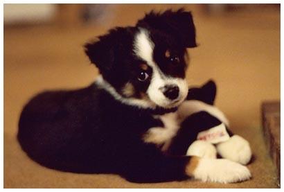 click for puppy pics