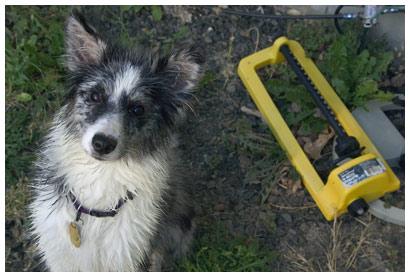 dog and sprinkler