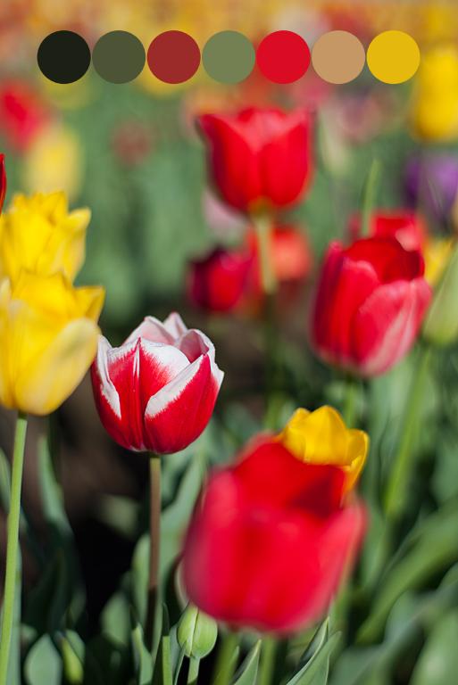 tulip palette